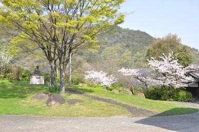 mainiwasakura