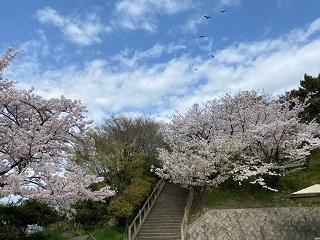 siroyamakouen